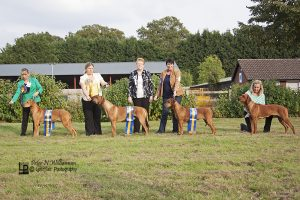 Best in Show and Reseve Best in Show Best Veteran & Best Puppy with Judge Cath Davis
