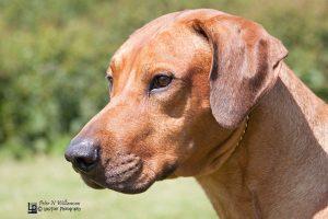 SPECIAL BEGGINERS DOG Veldtkammer Hot Shot of Lonaza ShCM